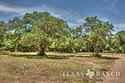 10 acre ranch Blanco County image 31
