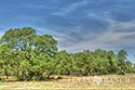 10 acre ranch Blanco County image 43