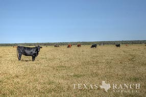 South Texas ranch 1176 acres, Zavala county image 2