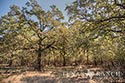 134 acre ranch McLennan County image 25