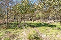 134 acre ranch McLennan County image 38