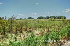Central Texas hunting sale 214 acres, Hamilton county image 1