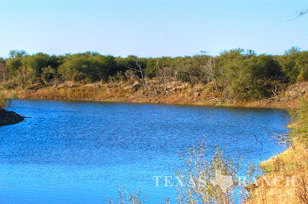 Live water ranch 321 acres, Live Oak county image 2