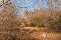 321 acre ranch Live Oak County image 3