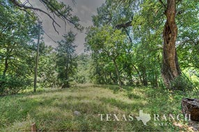 South Texas ranch 511 acres, Zavala county image 2