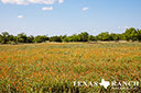 740 acre ranch Concho County image 24