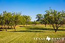 740 acre ranch Concho County image 34