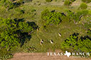 740 acre ranch Concho County image 42