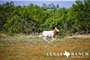 740 acre ranch Concho County image 51
