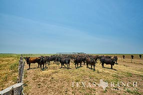 South Texas ranch 812 acres, Zavala and Frio county image 2