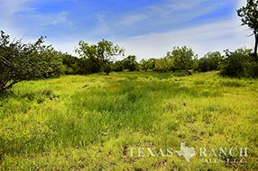 South Texas ranch 840 acres, Zavala county image 2