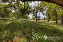 95 acre ranch Kendall County image 25